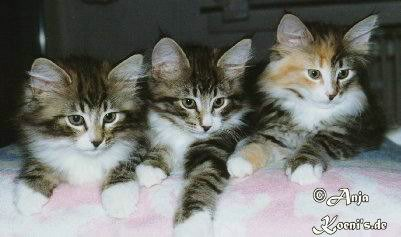 Geronemo, Gismo and Geeny