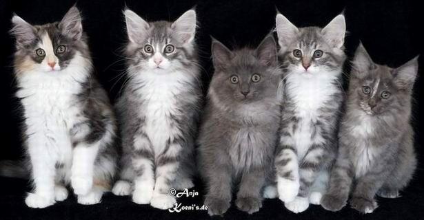 Kalhua, Kalle, Kuno, Ken & Keira - 11,5 weeks old