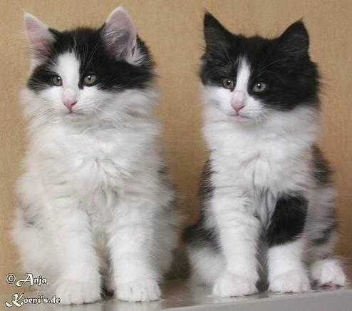 Lysander & Leonie - 10 weeks old