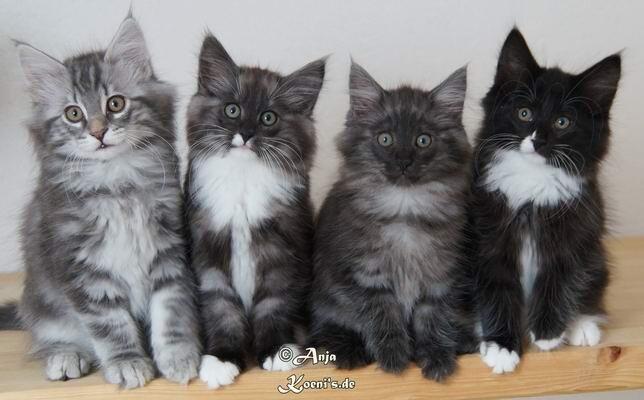 Ludwig, Loona, Lara & Laila - almost 11 weeks old