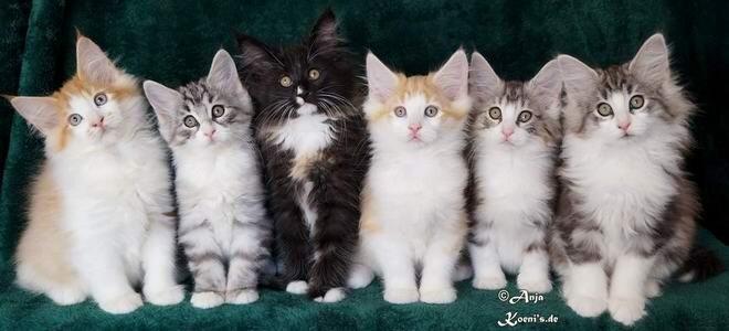 Merlot, Marlon, Marla, Marlin, Mina & Mia - 75 days old