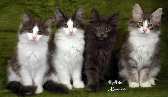 Nourani, Nele, Nanna & Nailani - 86 days old