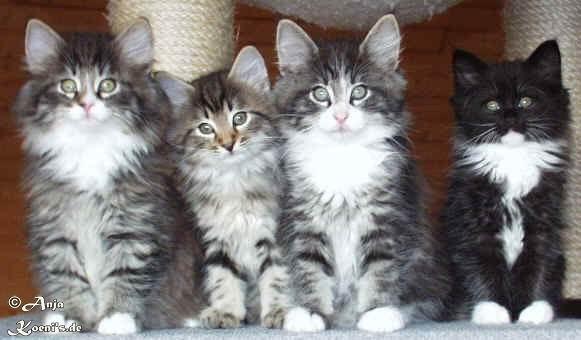 Pirat, Percy, Portas & Penelope