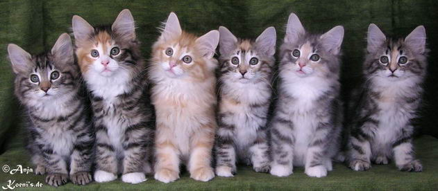 Pamina, Pippa, Peppone, Pauline, Pandora, Penola - 10 weeks old