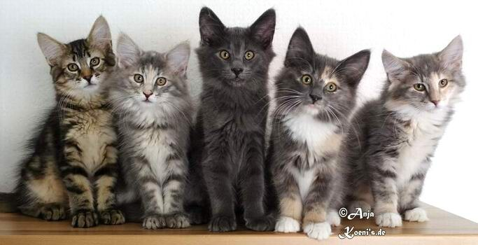 Timón, Tatiara, Thor, Tamina & Tiama - 12 weeks old